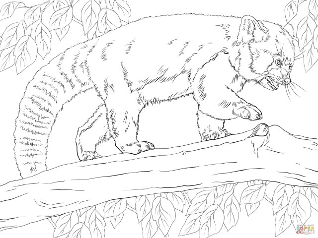 Red Panda Coloring Page Realistic Red Panda Coloring Page Free Printable Coloring Pages