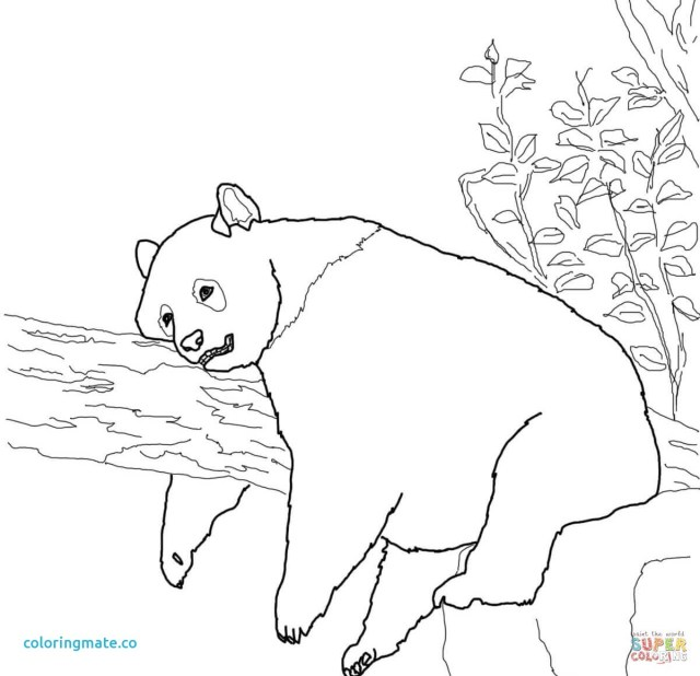 Red Panda Coloring Page Red Panda Drawing At Getdrawings Free For Personal Use Red