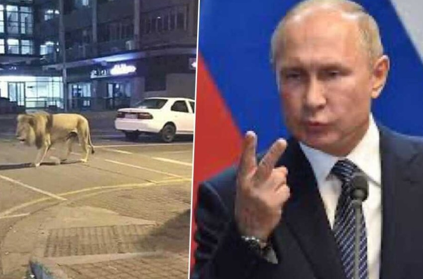 News of Russian President Putting out Lions To make People Stay Home – is false [SEE VIDEO]