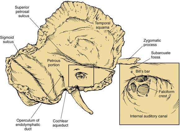Anatomy of the Temporal Bone, External Ear, and Middle Ear ...