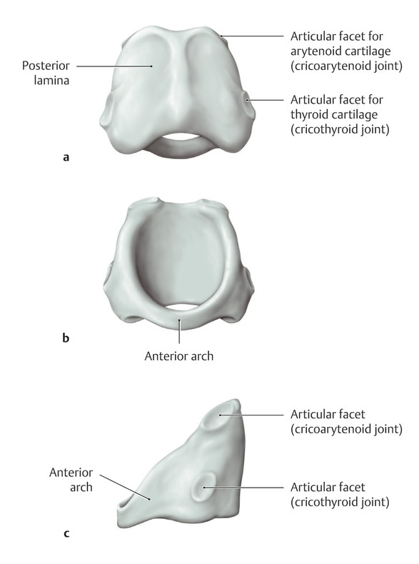 Cricoid cartilage. (a) Posterior view. (b) Anterior view. (c) Left lateral view.