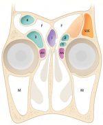 Sinonasal Anatomy