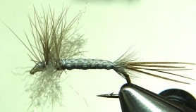 Nielsen's gray drake spinner pattern uses thread cross-hatched over caribou hair to simulate the body segmentation of an adult early brown quill mayfly (Siphlonurus quebecensis).