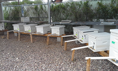 hives with PVC tubes