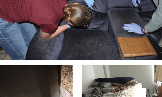 bed bug management methods