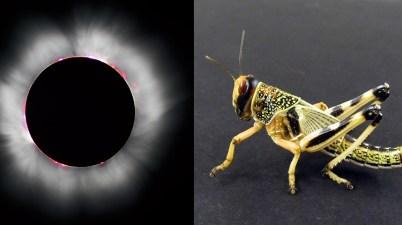 eclipse and locust