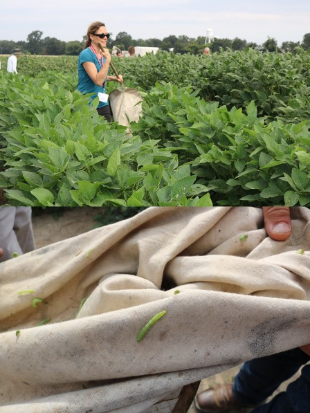 science policy field tour - soybean field