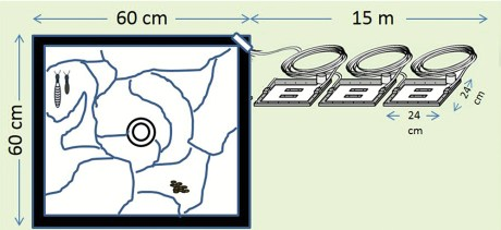 termite habitat diagram