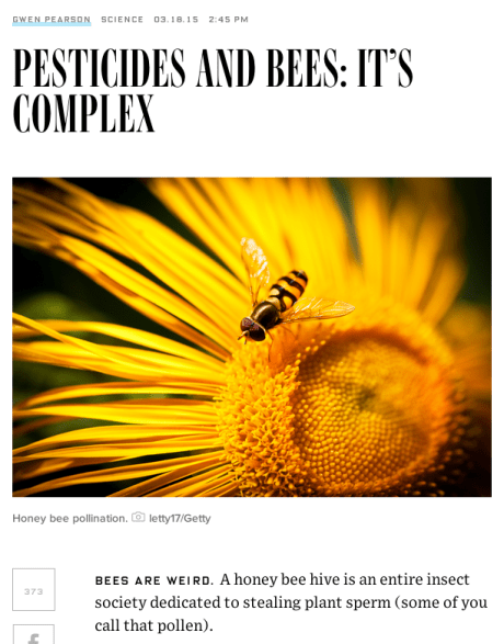 photo of a fly on a story about bees