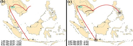 macrotermes gilvus dispersal maps