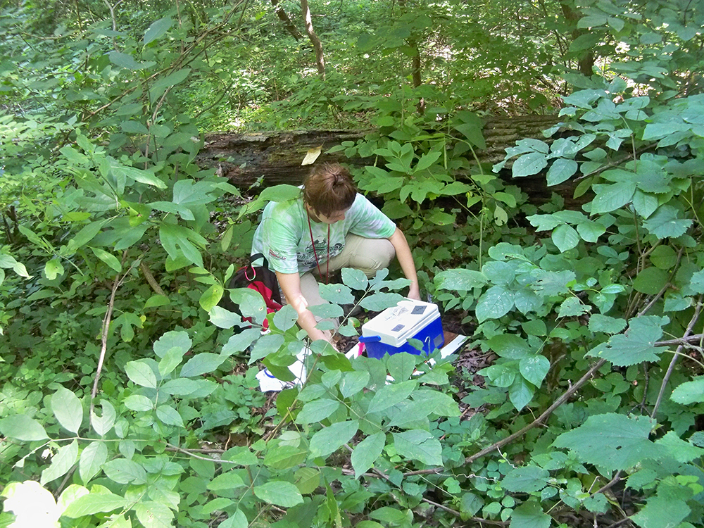 Lexie Beckermann field work