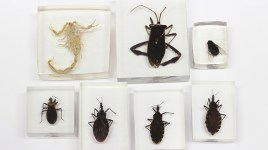 insect and arthropod specimens in resin