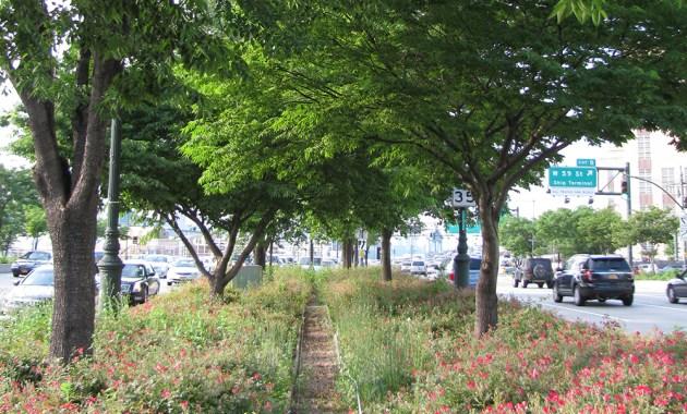 NYC roadway median