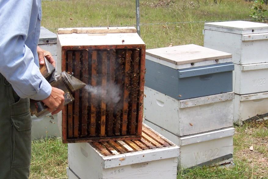 bee hive smoking