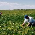 growers in field