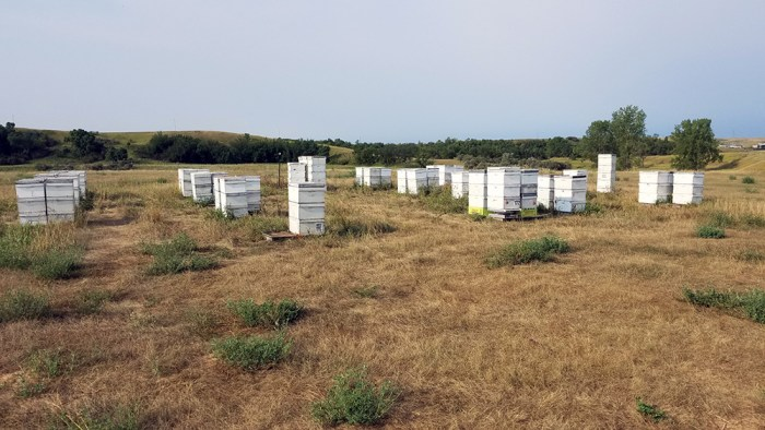 honey bee yard at Schulz's Farm