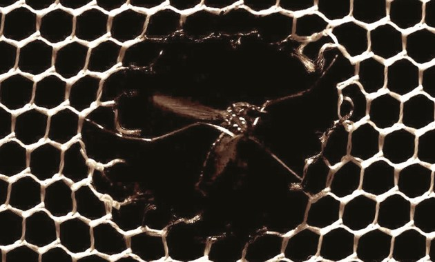 mosquito flying through hole