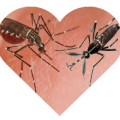 mosquitoes - doomed lovers