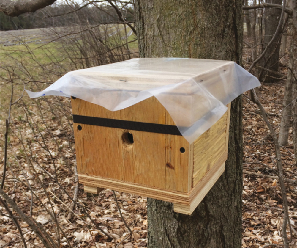 Putting Bumble Bees in a Box Might Help Scientists Study Their Nesting Ecology