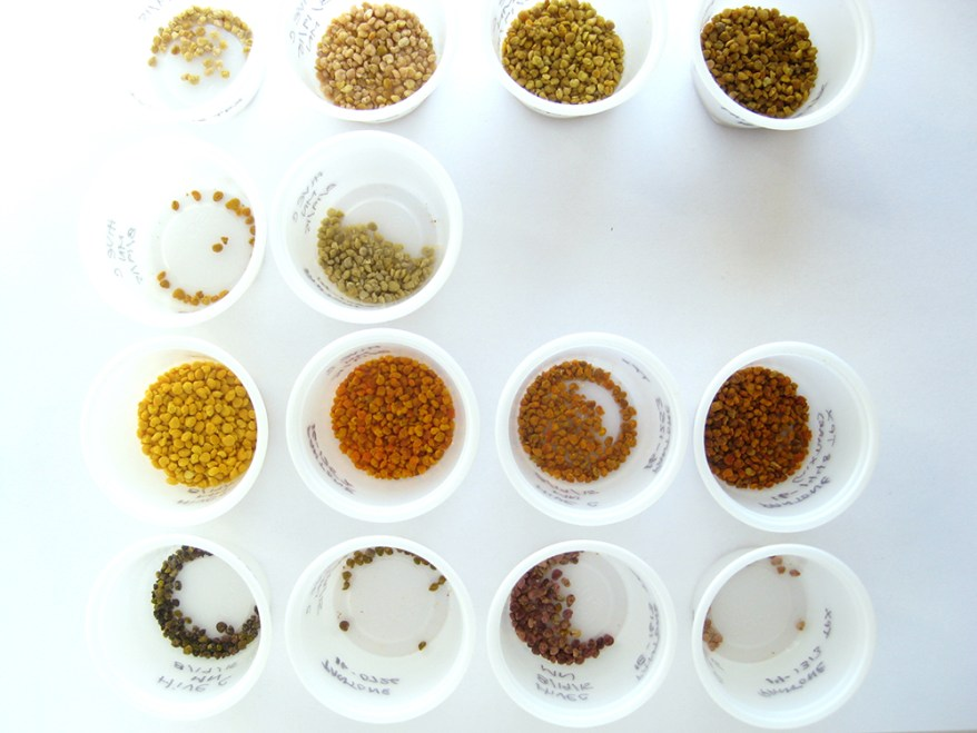 pollen sorted by color