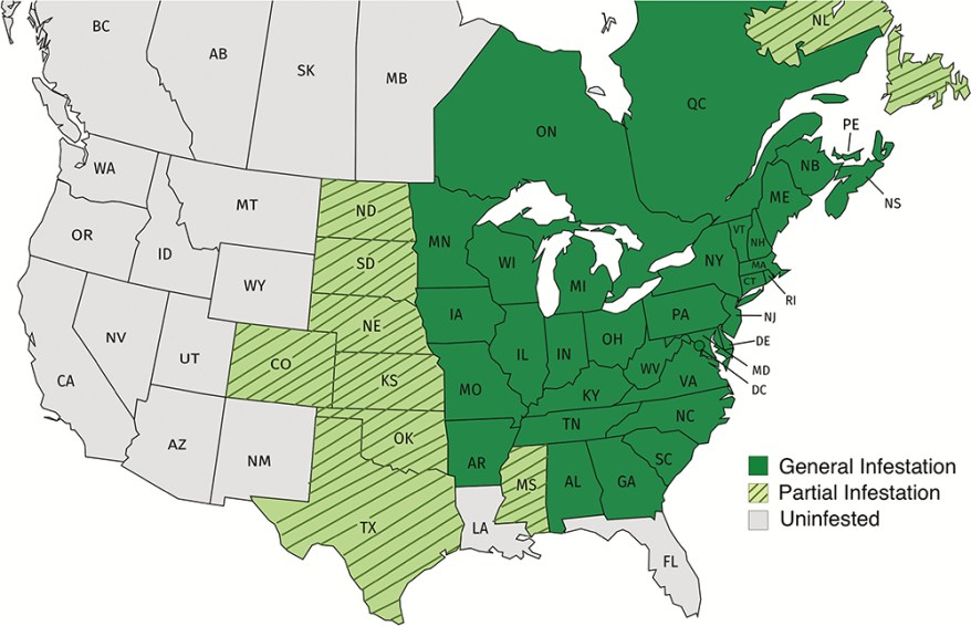 Japanese beetle in US and Canada