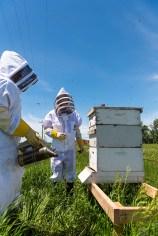 bee hives at North Dakota State University