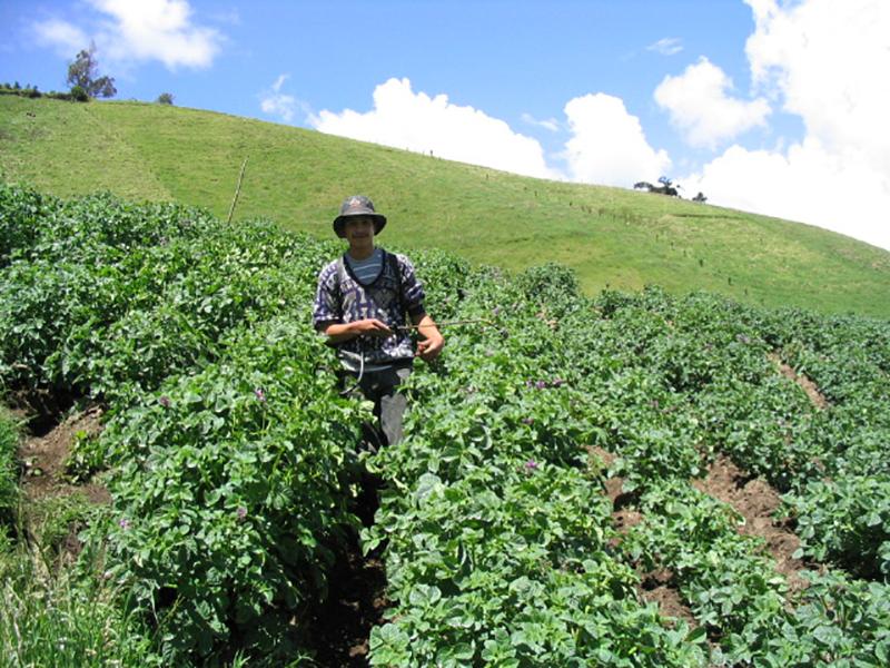 Ecuador farm field