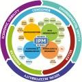 new IPM paradigm diagram