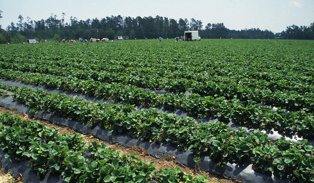 Why Modern IPM Should Take a Wider View of Key Influences
