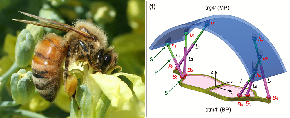 How a Honey Bee's Waggle is Inspiring Aerospace Design