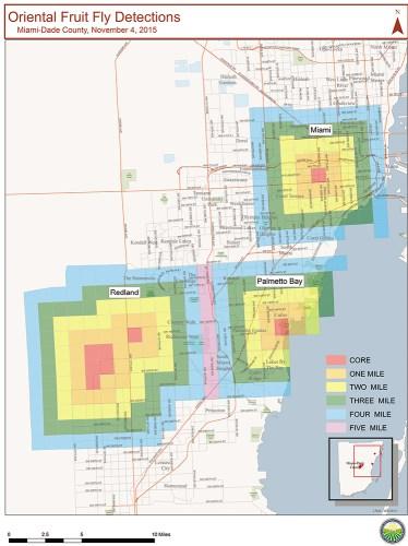 Bactrocera dorsalis detection map