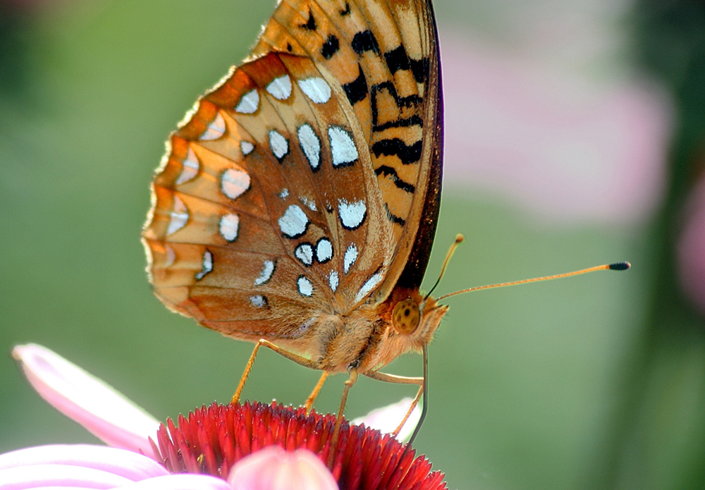 The Eyes Have It: How Butterflies Navigate to Suitable Habitat