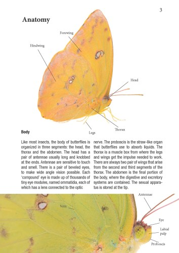 Anatomy page from Butterflies of the Pipeline Road.