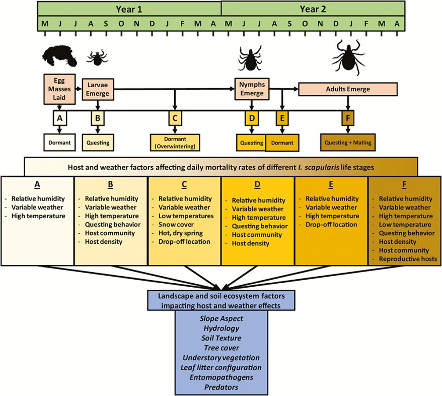 tick lifecycle and soil ecology