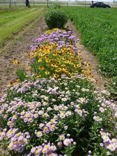 wildflower strip