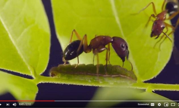 ants and blues screenshot