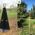 brown marmorated stink bug trap comparison