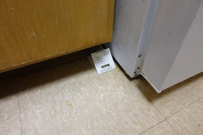 Sticky trap placed to monitor cockroaches