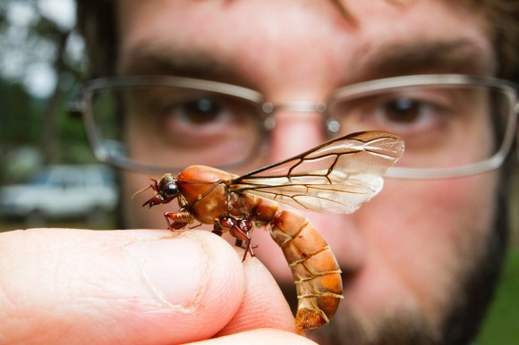 Jackson Helms with Dorylus ant