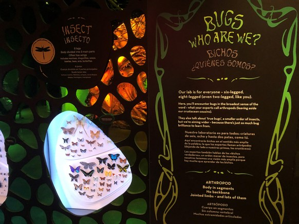 Fantastic Bug Encounters exhibit intro