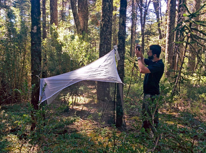 Bernardo Santos: wasp collecting in Chile