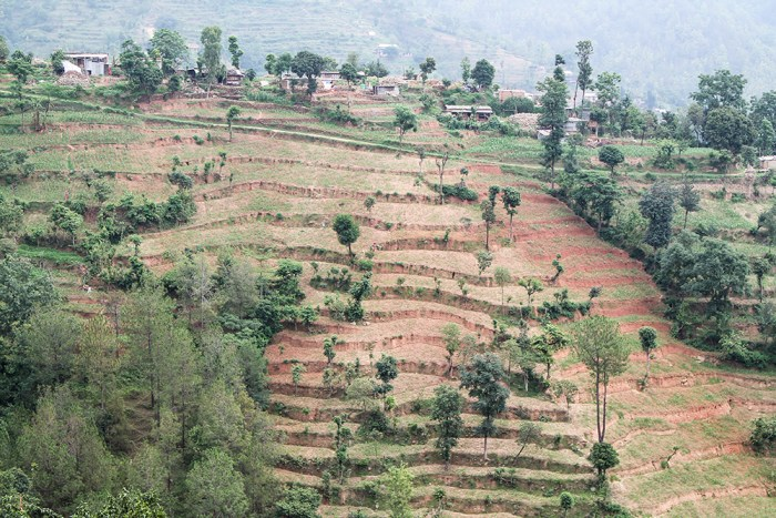 Nepal terraces