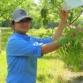 Angelita Acebes-Doria Field Work