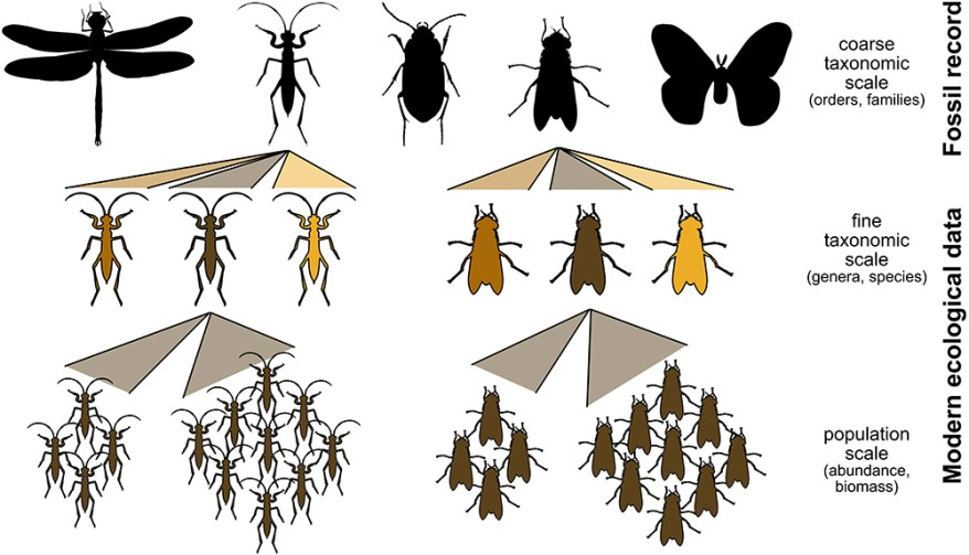 insect fossil record vs. ecological record