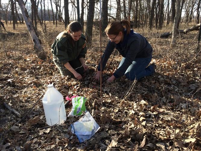 dung beetle research fieldwork