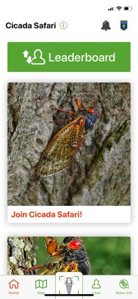 Cicada Safari screenshot