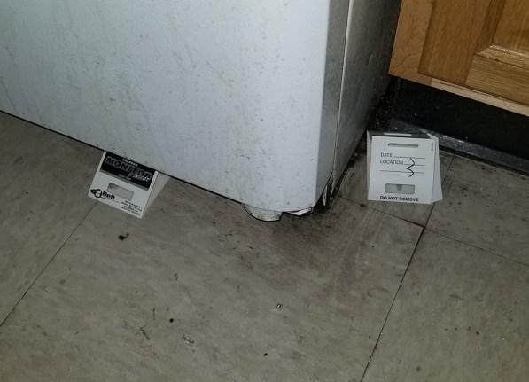 cockroach sticky traps