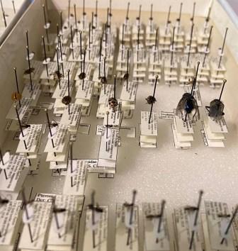pinned specimens
