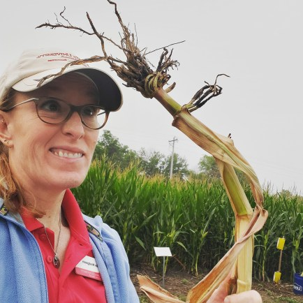 corn rootworm injury