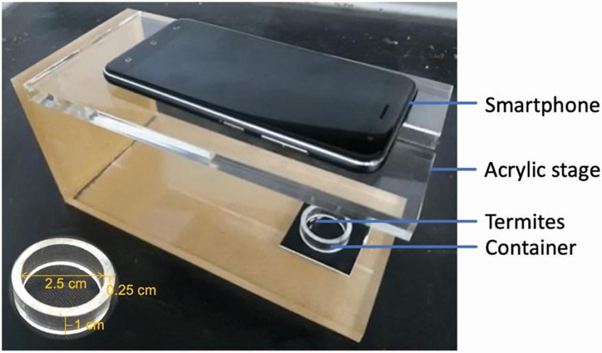 smartphone termite photo setup